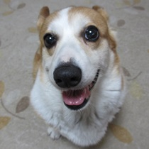 愛犬パール